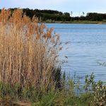 Obrovští kapři nebo jeseteři: Luxusně zarybněná svazová voda dělá rybářům radost! Kde ji najdete?