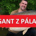 Do 30 kilo kaprovi nechybělo mnoho! Na Novomlýnských jezerech ulovili gigantického kapra!