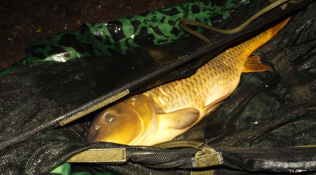 Povinné podložky pod ryby nebo úplný zákaz trojháčků? Měl by být rybářský řád přísnější?