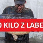 Gigantický kapr zLabe o váze 30 kilo! Ryba měřila neuvěřitelných 112 centimetrů!