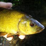 VIDEO: Jednoduché rybaření na splávek u vodních rostlin! Tady jsou ryby vždycky!
