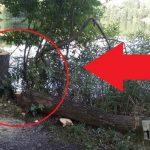 Ničení stromů pokračuje: Na oblíbeném svazovém revíru zase řádil vandal! Rybáři prosí o pomoc