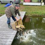České svazovky plné ryb: Rybáři nasadili ryby za desítky miliónů korun! Tady je přehled