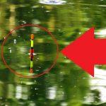 VIDEO: Nejkrásnější záběry na splávek! Tohle miluje každý rybář