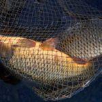 Masaři si nedají pokoj! Rybářská stráž sbírá povolenky za nezapsané kapry nebo 3 udice