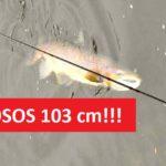 Trofejní úlovek: Další gigantický losos zLabe! Rybář ulovil lososa o délce 103 centimetrů!