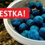 Vylepšená klasika na kapry: Modré rohlíkové boilies s vůní švestek! Stojí pár korun!