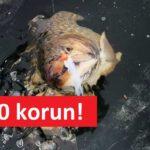 Levné chytání ryb na dírkách: Pruty na dírky jen za 150 korun! Neutrácejte balík peněz