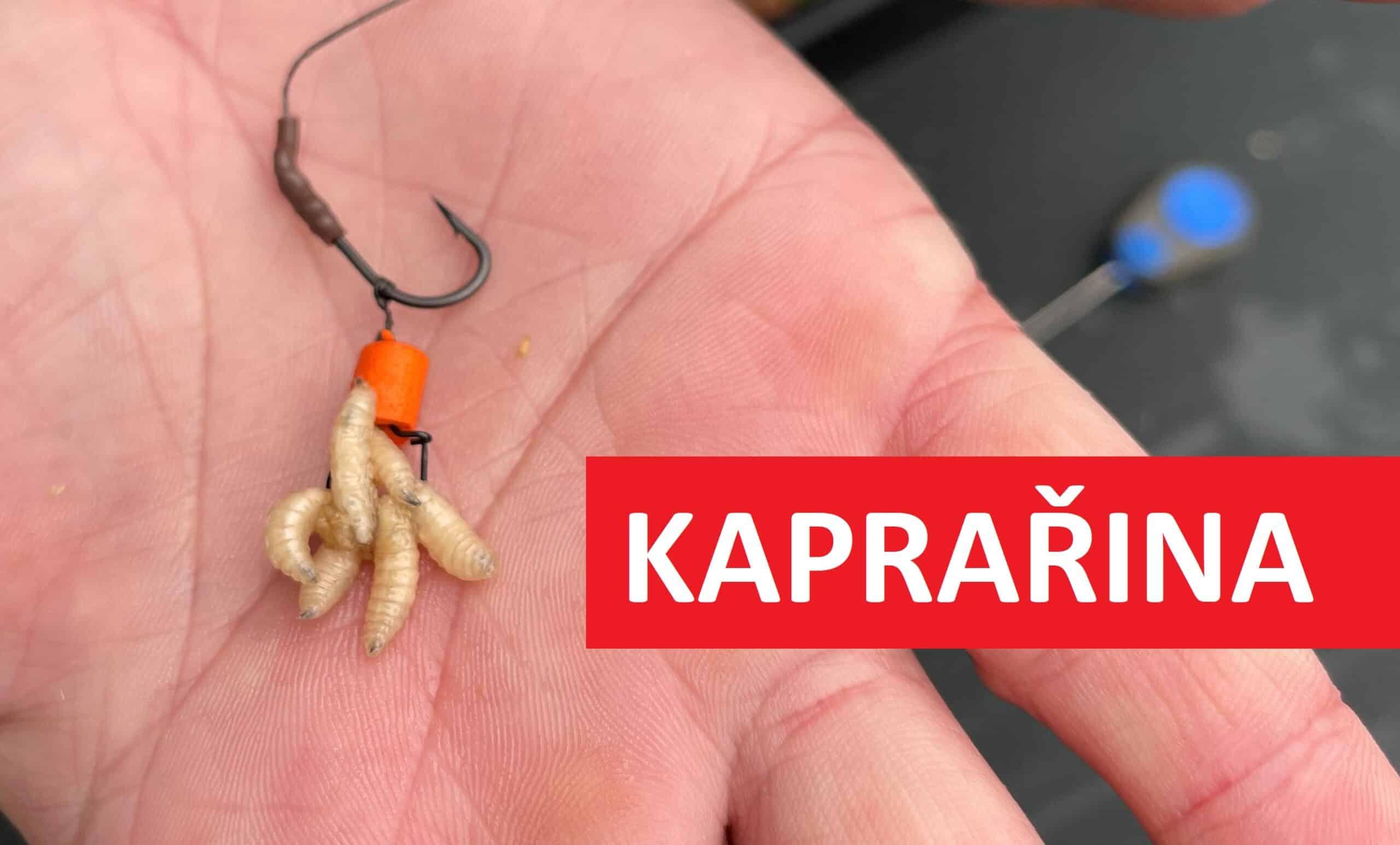 Návazec na kapra sčervy: Jak úspěšně chytat kapry na červy? Zkuste tuhle vychytávku!