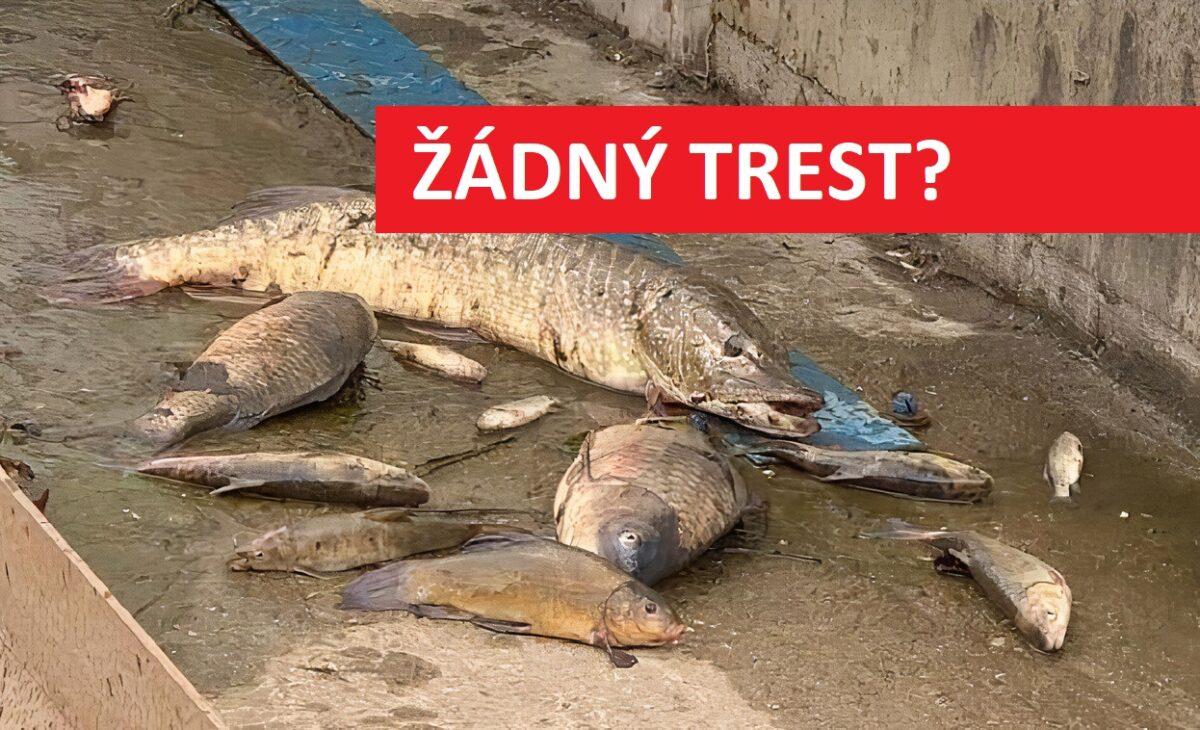 Za hromadný úhyn ryb nikdo nemůže! Policie uzavřela případ na Bílině