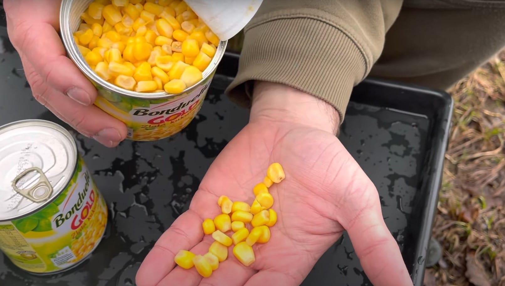 Kukuřice na ryby do krmení: Chutná kukuřice těm největším kaprům? A jak s ní krmit?