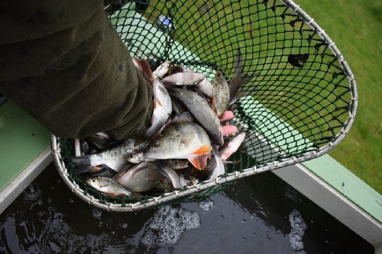 Chemička srybáři vysadila do řeky nové ryby! Nasazovali se cejni i dravci