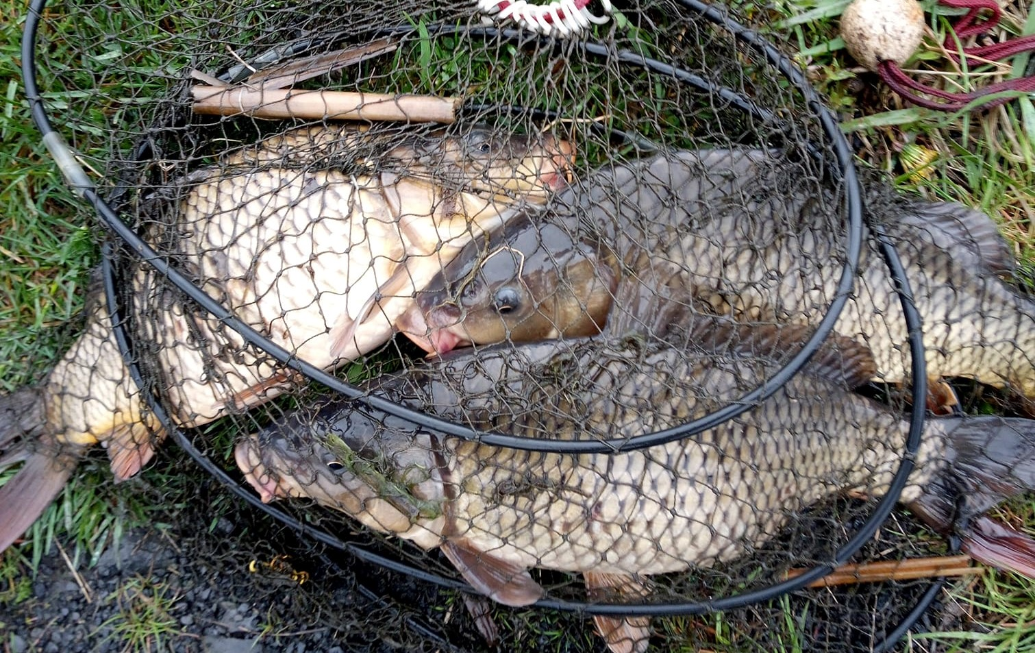 Pytlák měl ve vezírku 3 kapry! Rybář na něj přivolal rybářskou stráž