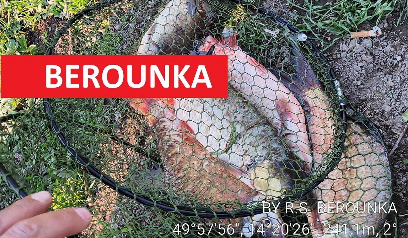 Rybářská stráž na Berounce má pohotovost! Rybáři odnášejí hájené druhy ryb