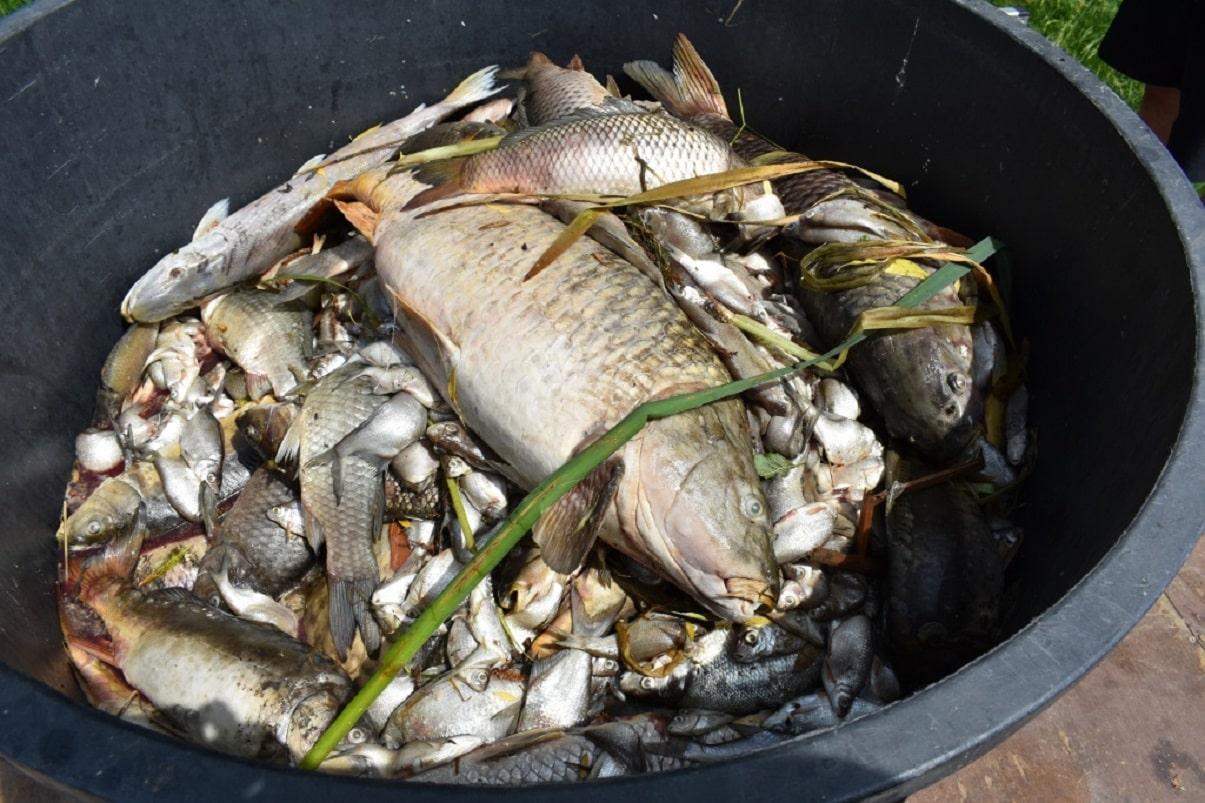 Mrtví trofejní kapři a štiky! V revíru uhynulo více jak 1000 kilo ryb! Proč?
