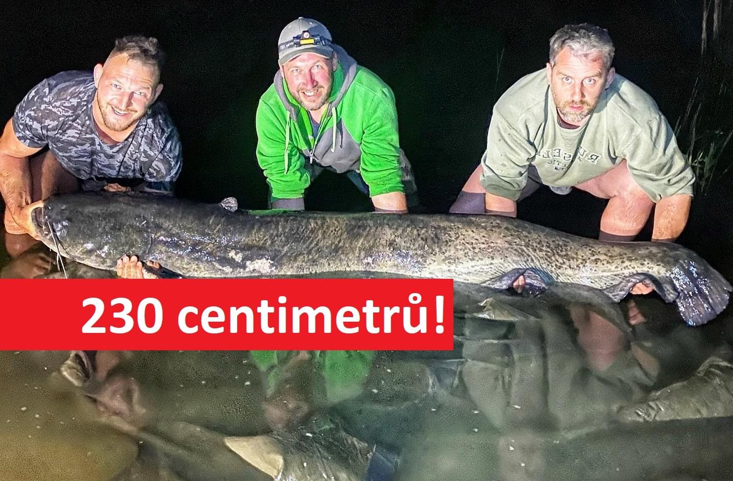 Gigantický sumec Lukáše Krpálka! Judista na české pískovně chytil 230 centimetrového sumce!