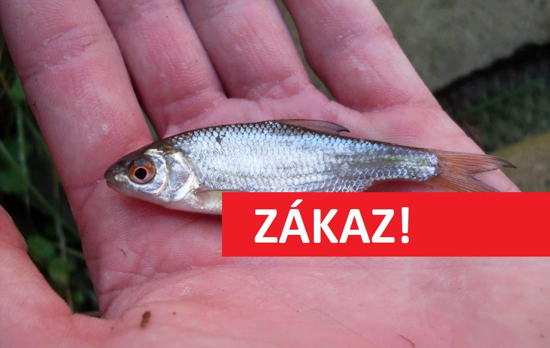 Zákaz používání haltýřů od roku 2022! Rybáři chtějí lépe chránit uchovávané ryby