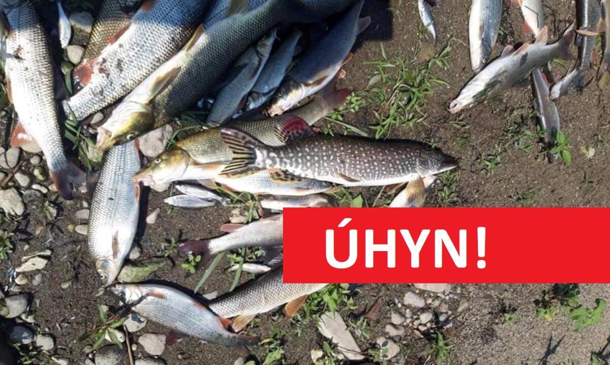 Masakr! Mrtví candáti, hlavatky nebo parmy! Do řeky unikla toxická látka