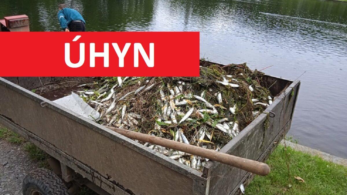 Nedostatek kyslíku zabil metráky ryb! Vrybníku hromadně uhynulo přes 200 kilo síhů
