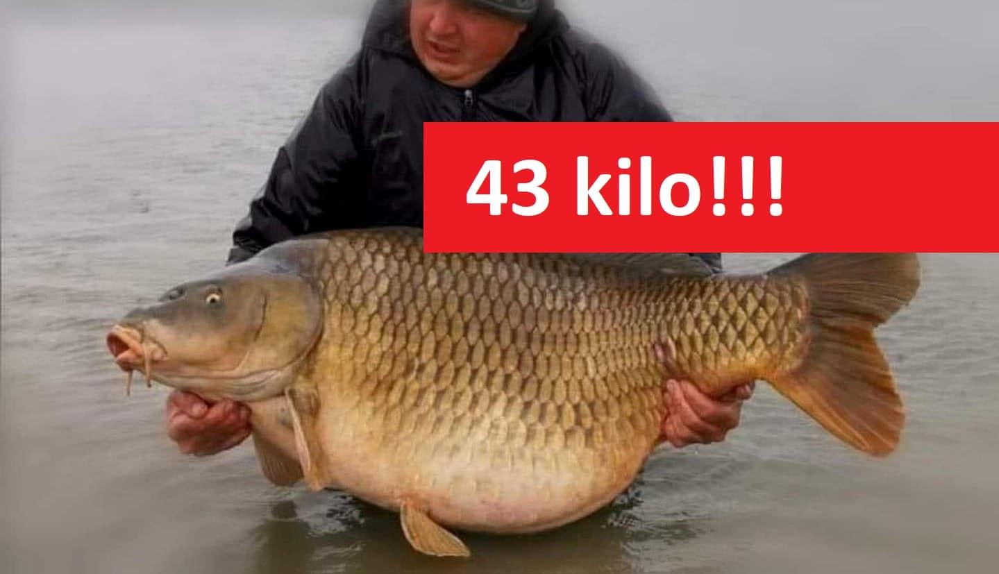 Gigantický kapr o váze 43 kilogramů! Podívejte se na fascinující fotky!