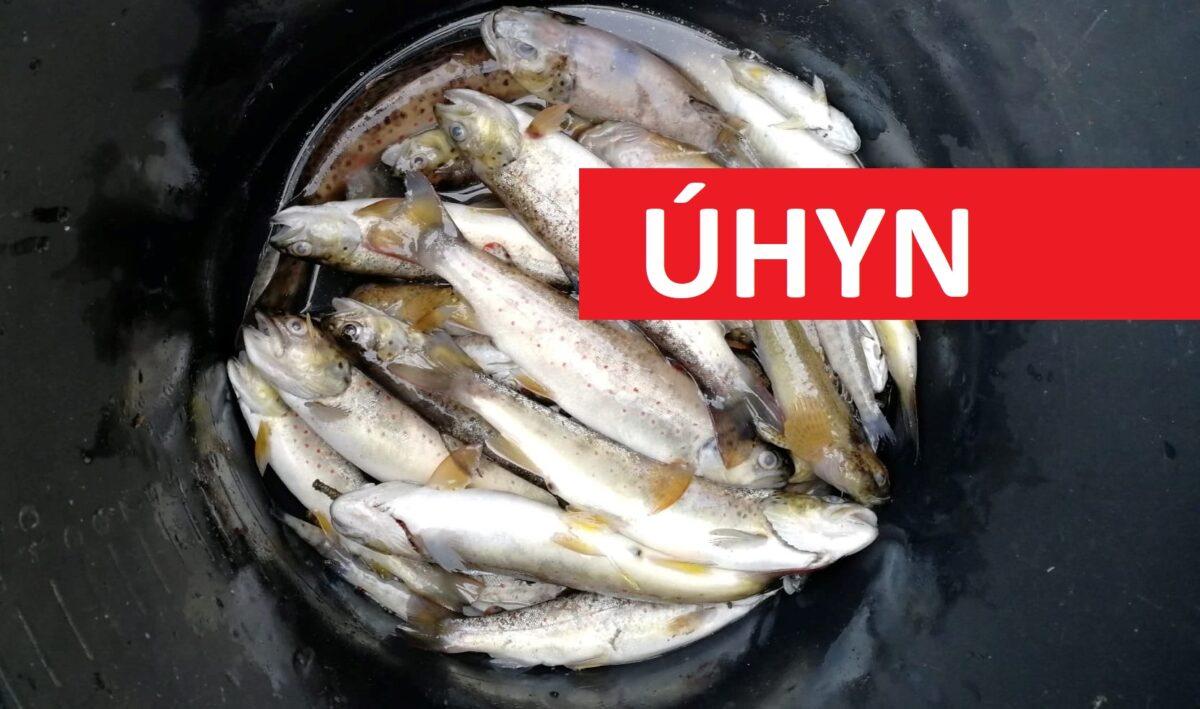 VIDEO: Masakr na Moravě! Nedostatek kyslíku ve vodě zabil stovky ryb