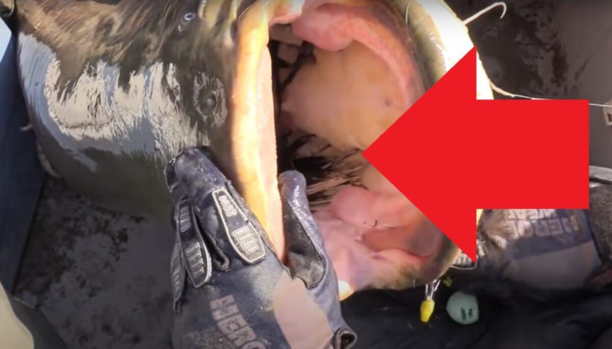 VIDEO: Rybáři chytili giga sumce o váze 100 kilo! V jehotlamě našli kormorána