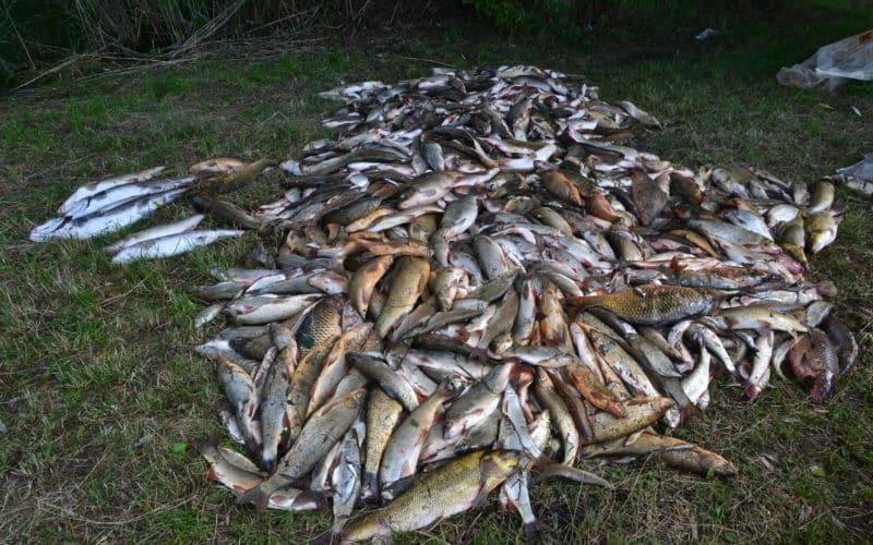Rybáři se snaží obnovit otrávenou řeku! Ministerstvo jim finančně nepomůže