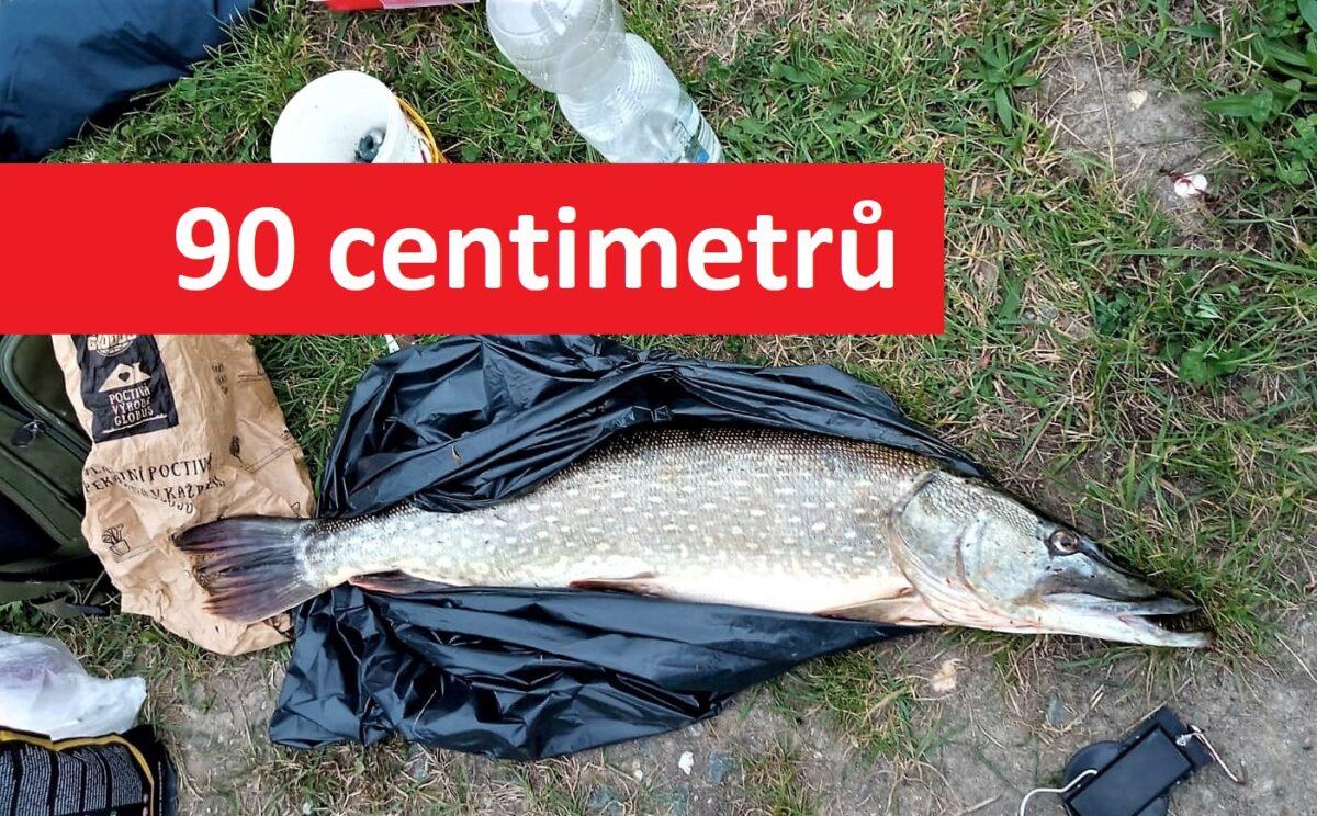 Rybář zabil trofejní štiku, i když ji musel pustit! Na vodě si už nikdy nezachytá