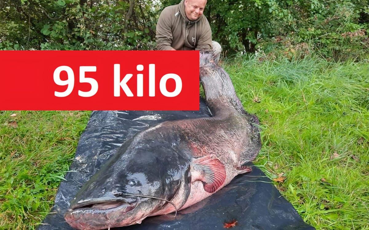 Giga sumec zČeska o váze 95 kilo a délce 251 čísel! Mrkněte na fotky fascinujícího obra!