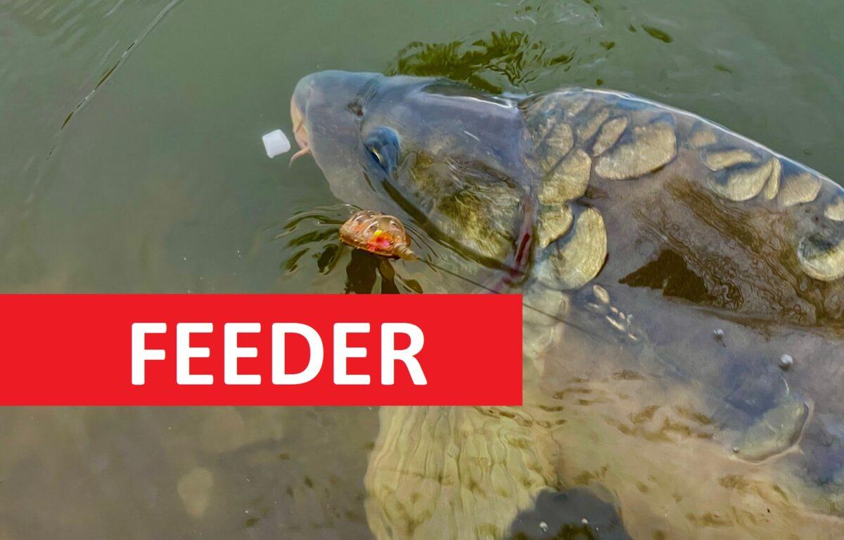 Jednoduchý návod na TOP krmení na feeder! Desítky záběrů za pár hodin?