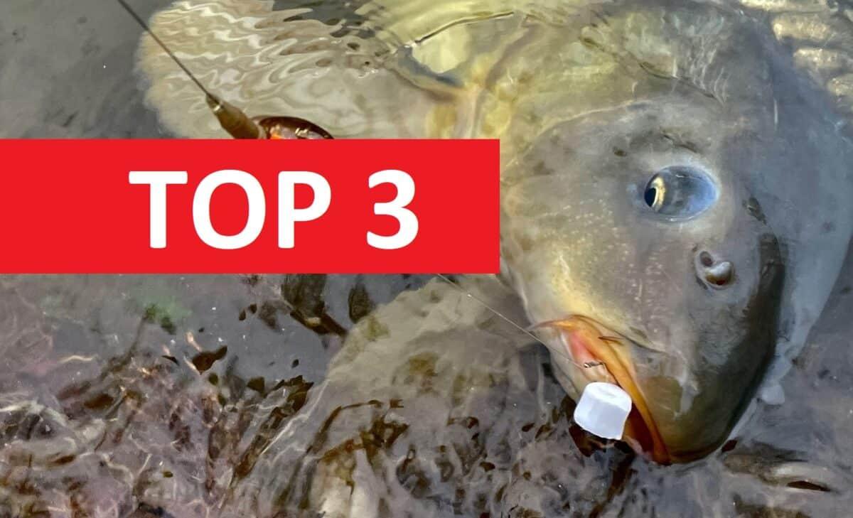 TOP 3 suroviny do krmení do chladné vody! Tohle podzimní kapři milují!