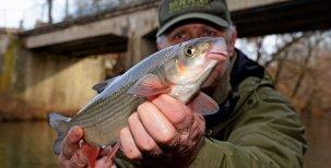 Když rybáři neznají ryby