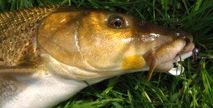 Abeceda mladého rybáře – Rybářské nástrahy