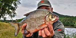 Velká ryba jménem cejnek malý