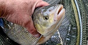 Švestkoví tloušti aneb rybaření ze zahrádky