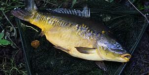Lov ryb zhladiny vpřekážkách