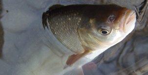 Abeceda mladého rybáře – Rostlinné nástrahy 2