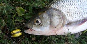 Abeceda mladého rybáře – Hmyz
