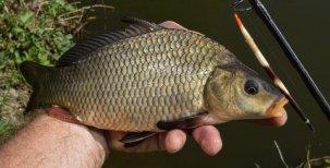 Na rybách sdikobrazem