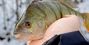 Rybaření vzimě – je třeba ubrat a zpomalit