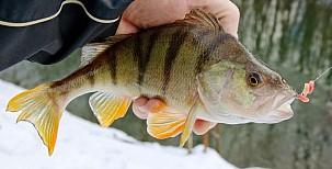 Pár důvodů proč nechodit vzimě na ryby