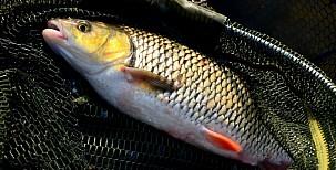 Drahý nebo levný prut pro rybaření?