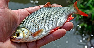Se splávkem za rybami podél břehu