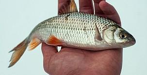 Lov ryb na dírkách 1. část