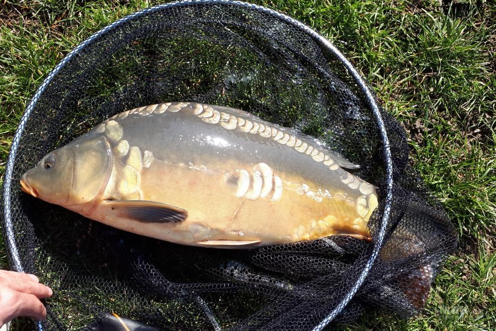 Jednoduchý lov ryb bez krmení