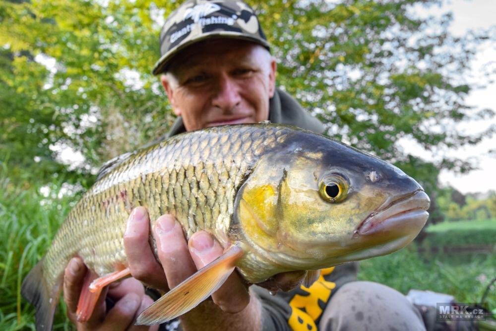 Úlovky tloušťů při rybaření s peletami