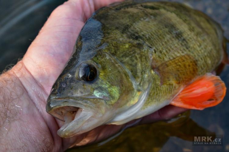 Velké ryby na malé nástrahy