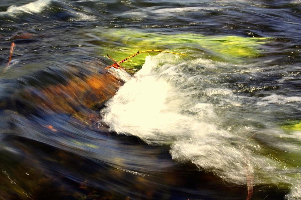 Únorové Rybářství:Progestiny v českých vodách, vše o kaprovi a indián s třesoucíma se rukama