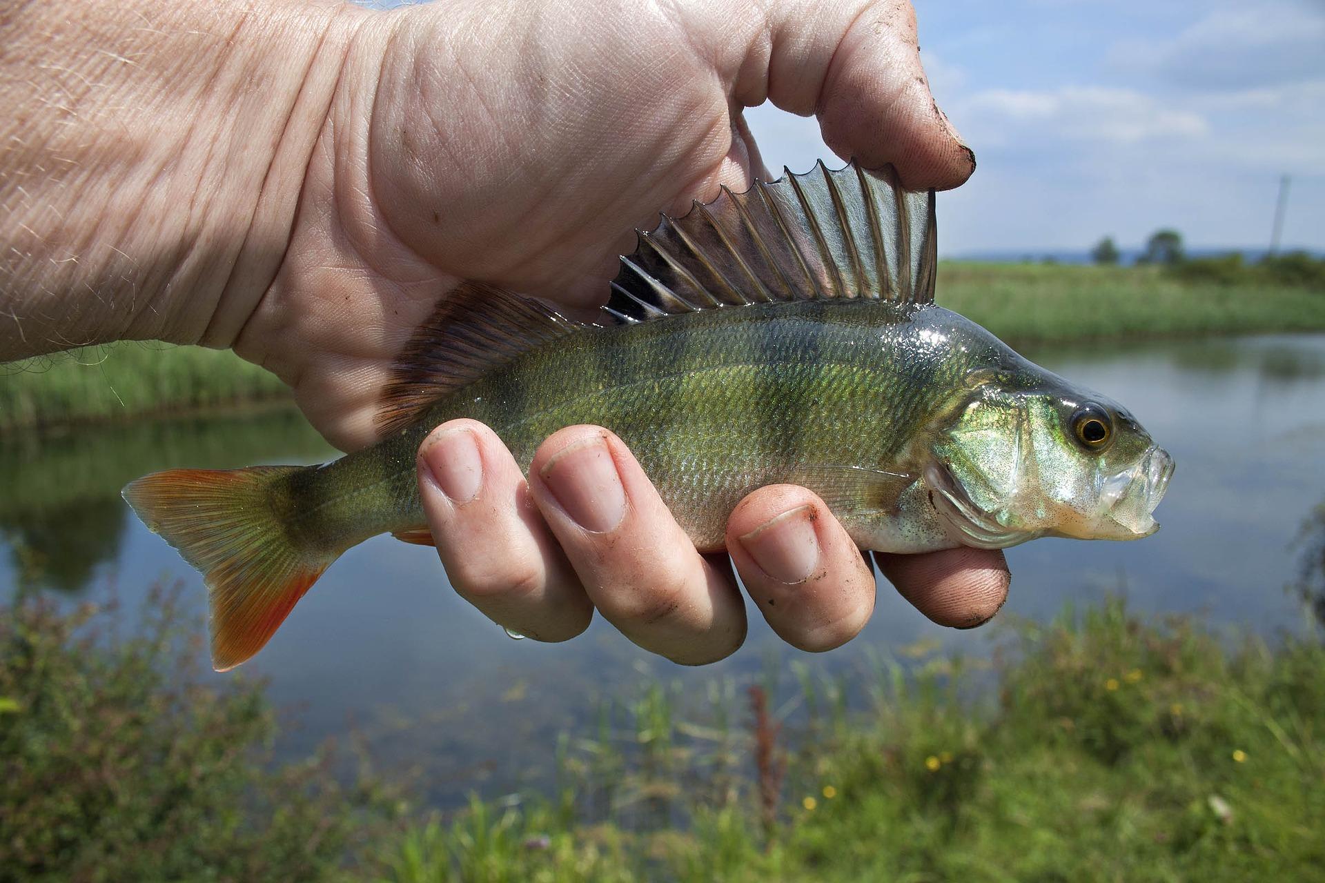 27. červen: Světový den rybářství