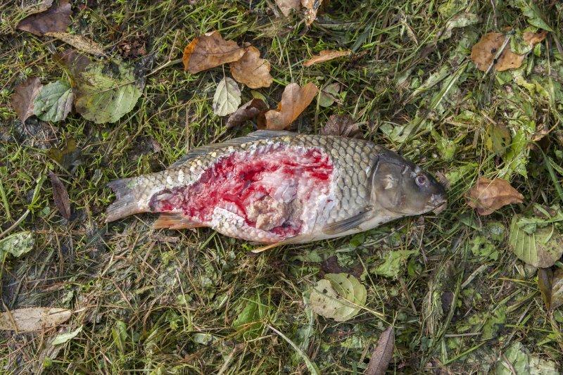 ČRS jednal o rybožravých predátorech se senátory a zástupci MZe a MŽP